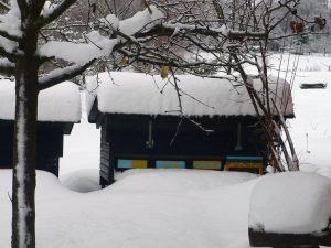 bienen-winter